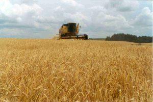 trigo-cosechadora